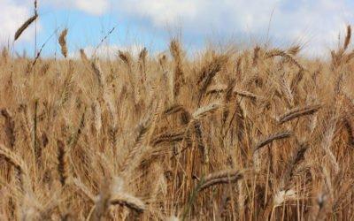 L'empreinte carbone de notre alimentation