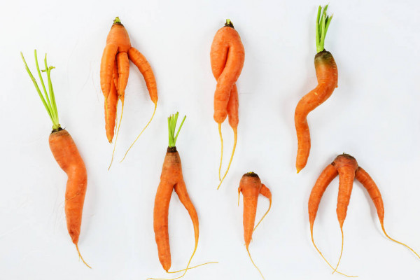 carottes-moches